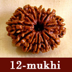 astrology rudraksha beads hyderabad